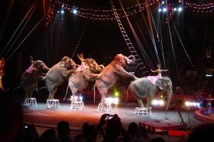 Attività circense (circo, circo equestre, ecc.)
