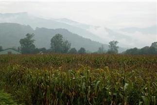 Prodotti fitosanitari, commercio